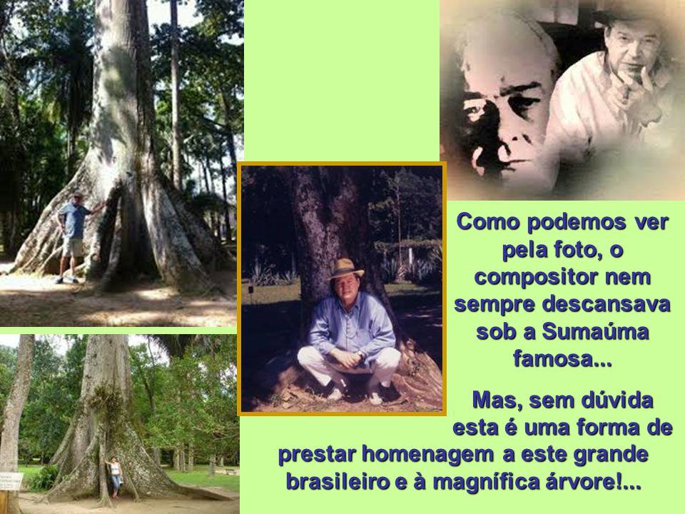 Região Amazônica Sumaúma (Ceiba pentandra L.) Tal como o mogno, suas raízes tabulares se destacam e o diâmetro é bastante largo. A árvore é, hoje, ref