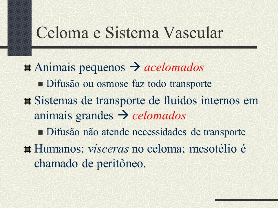 Celoma e Sistema Vascular Animais pequenos  acelomados Difusão ou osmose faz todo transporte Sistemas de transporte de fluidos internos em animais gr