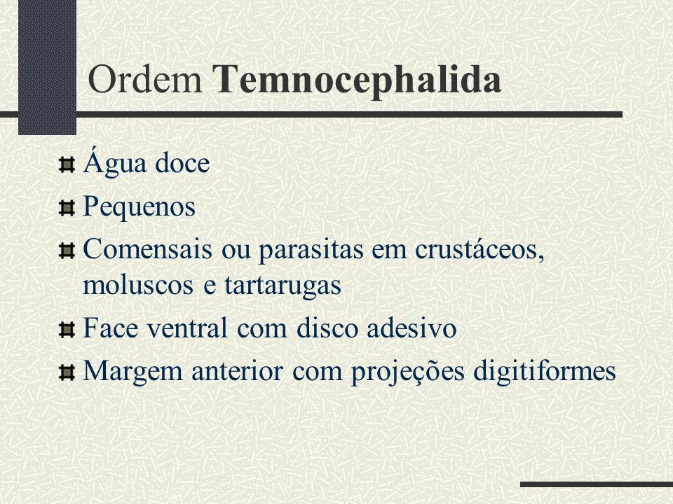 Ordem Temnocephalida Água doce Pequenos Comensais ou parasitas em crustáceos, moluscos e tartarugas Face ventral com disco adesivo Margem anterior com