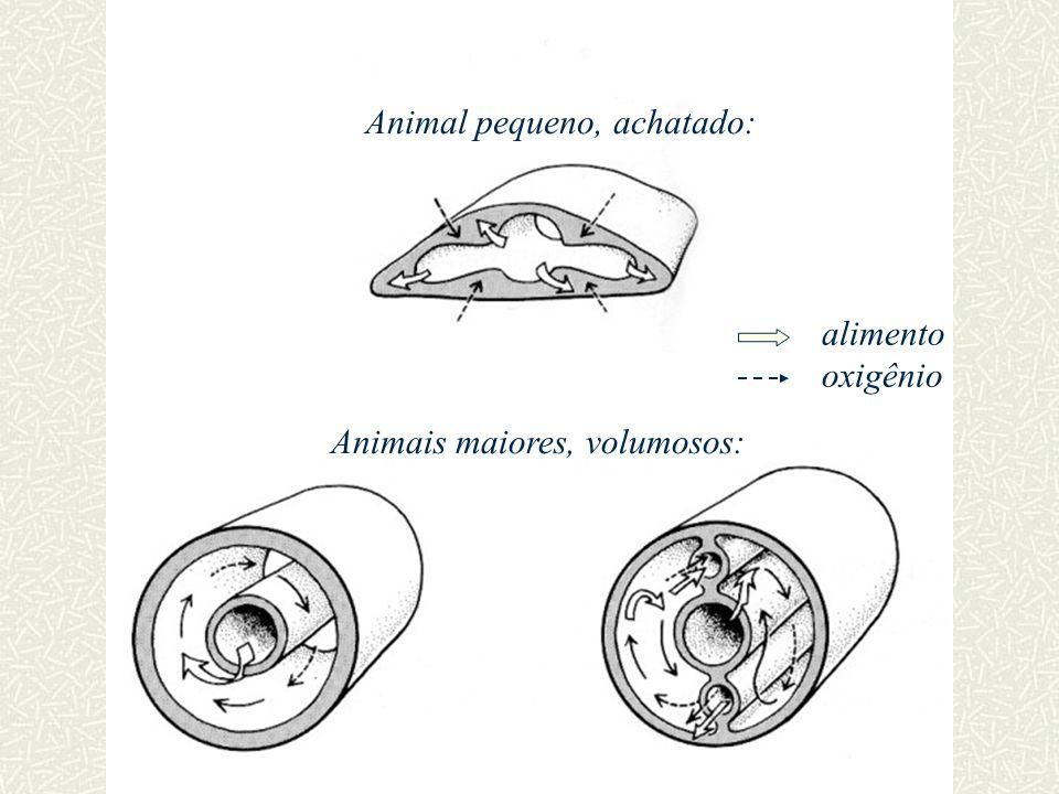 Animal pequeno, achatado: Animais maiores, volumosos: alimento oxigênio