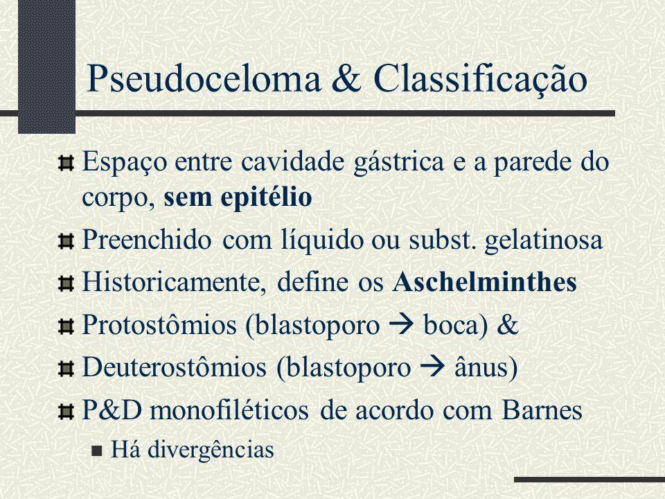 Pseudoceloma & Classificação Espaço entre cavidade gástrica e a parede do corpo, sem epitélio Preenchido com líquido ou subst. gelatinosa Historicamen