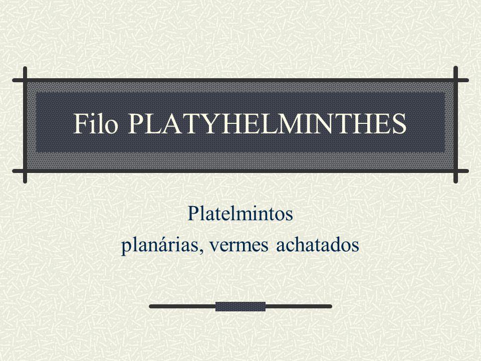 Filo PLATYHELMINTHES Platelmintos planárias, vermes achatados