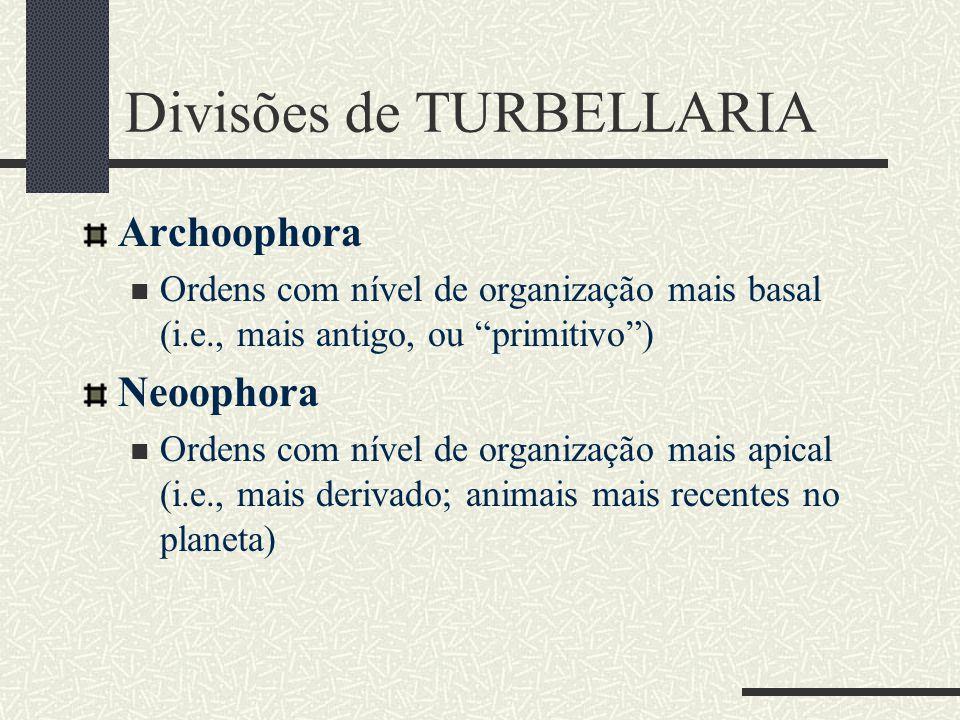 """Divisões de TURBELLARIA Archoophora Ordens com nível de organização mais basal (i.e., mais antigo, ou """"primitivo"""") Neoophora Ordens com nível de organ"""