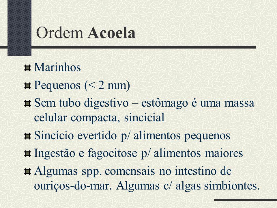Ordem Acoela Marinhos Pequenos (< 2 mm) Sem tubo digestivo – estômago é uma massa celular compacta, sincicial Sincício evertido p/ alimentos pequenos