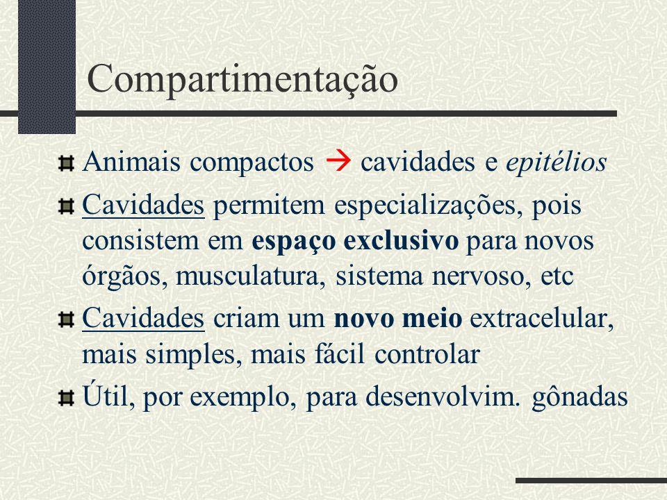 Compartimentação Animais compactos  cavidades e epitélios Cavidades permitem especializações, pois consistem em espaço exclusivo para novos órgãos, m