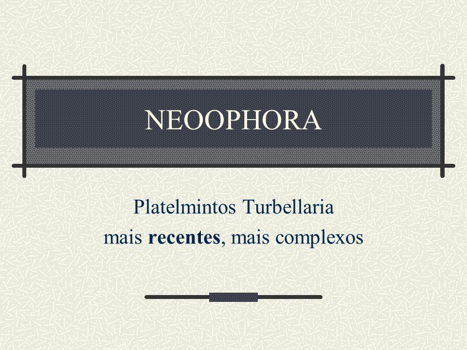 NEOOPHORA Platelmintos Turbellaria mais recentes, mais complexos