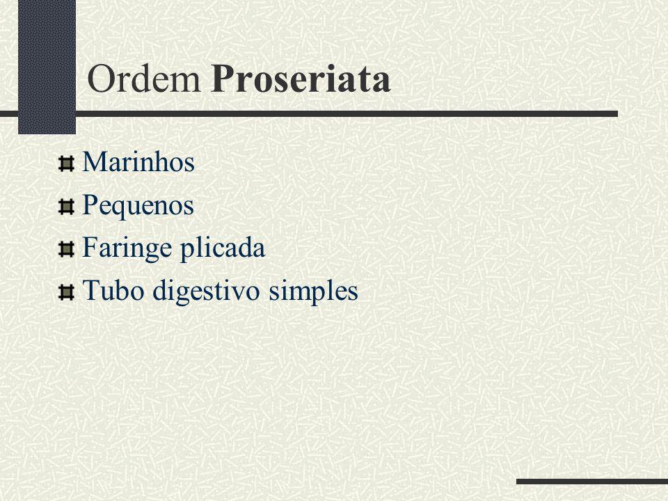Ordem Proseriata Marinhos Pequenos Faringe plicada Tubo digestivo simples