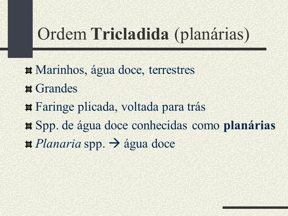 Ordem Tricladida (planárias) Marinhos, água doce, terrestres Grandes Faringe plicada, voltada para trás Spp. de água doce conhecidas como planárias Pl