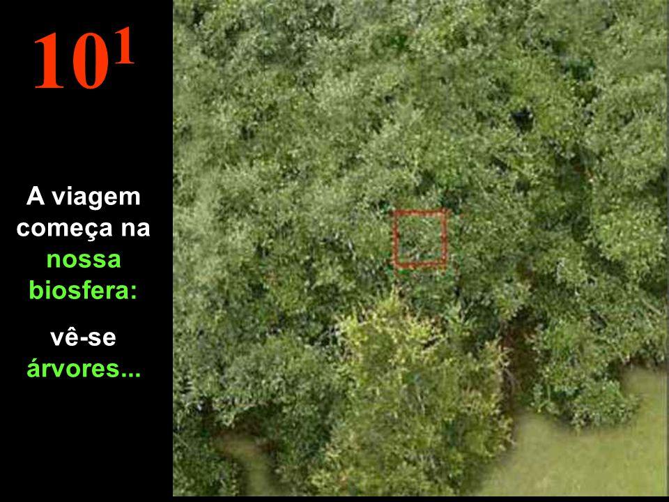 10 2 Conta-se agora em metros. À esta distância, vê-se madeiras, construções, etc....