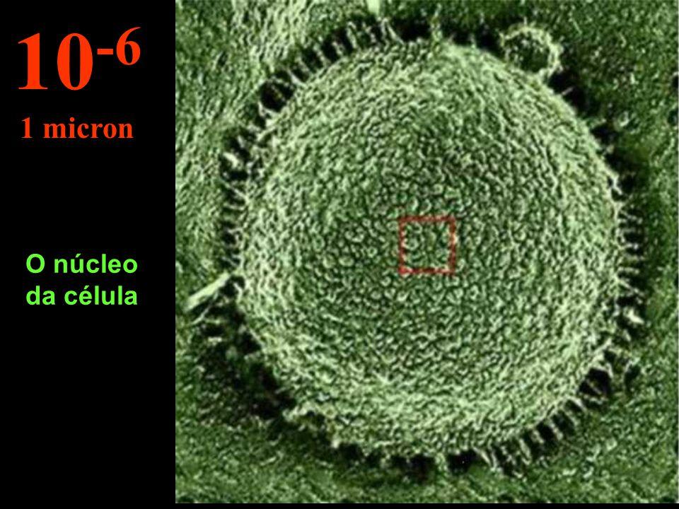 Vão para o interior de uma célula... 10 -5 10 microns