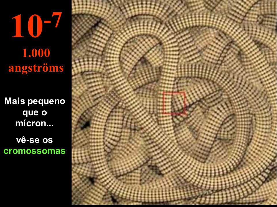 O núcleo da célula 10 -6 1 micron