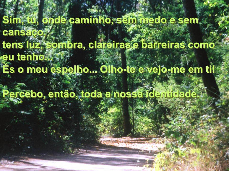 Sim, tu, onde caminho, sem medo e sem cansaço, Sim, tu, onde caminho, sem medo e sem cansaço, tens luz, sombra, clareiras e barreiras como eu tenho...