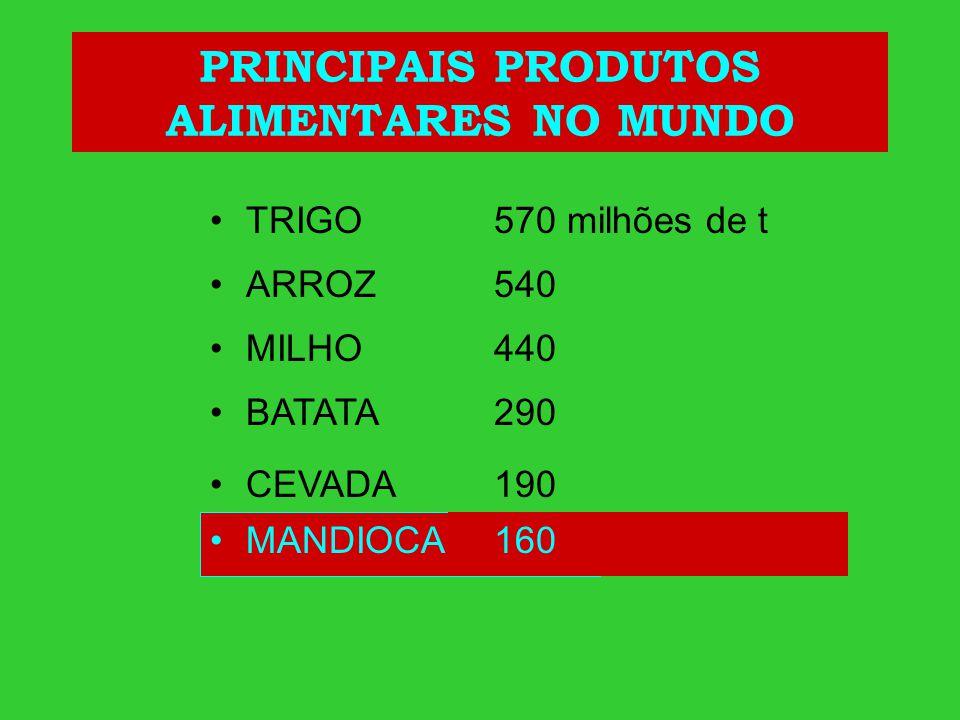 PRINCIPAIS PRODUTOS ALIMENTARES NO MUNDO TRIGO ARROZ MILHO BATATA CEVADA MANDIOCA 570 milhões de t 540 440 290 190 160