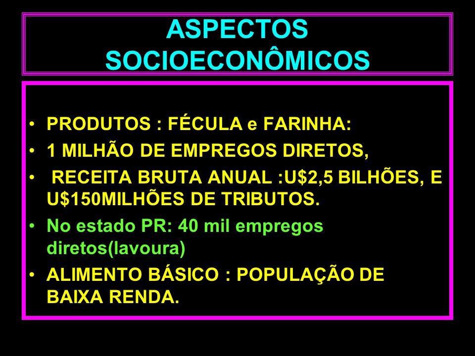 ASPECTOS SOCIOECONÔMICOS PRODUTOS : FÉCULA e FARINHA: 1 MILHÃO DE EMPREGOS DIRETOS, RECEITA BRUTA ANUAL :U$2,5 BILHÕES, E U$150MILHÕES DE TRIBUTOS. No