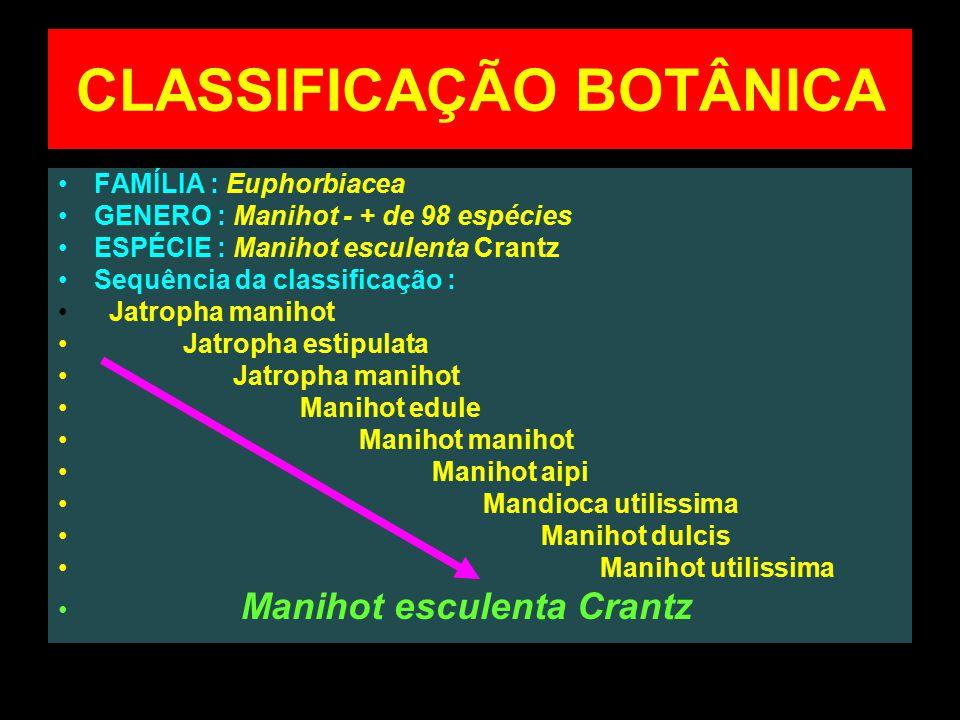 CLASSIFICAÇÃO BOTÂNICA FAMÍLIA : Euphorbiacea GENERO : Manihot - + de 98 espécies ESPÉCIE : Manihot esculenta Crantz Sequência da classificação : Jatr