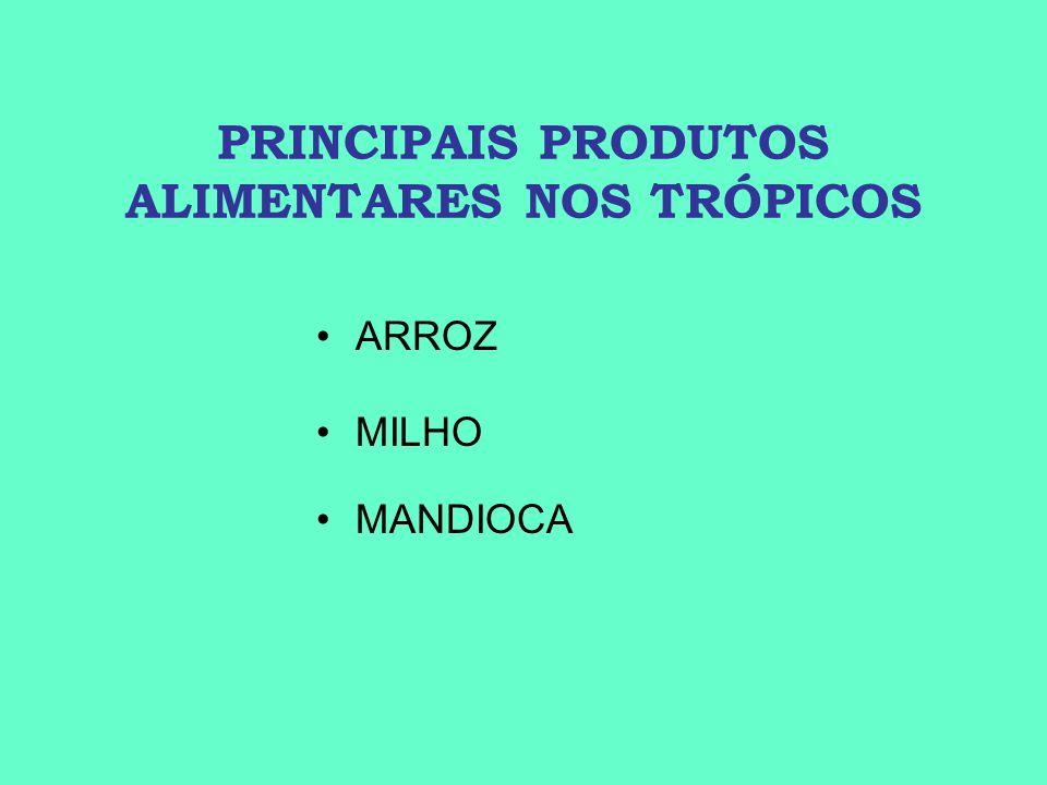 PRINCIPAIS PRODUTOS ALIMENTARES NOS TRÓPICOS ARROZ MILHO MANDIOCA