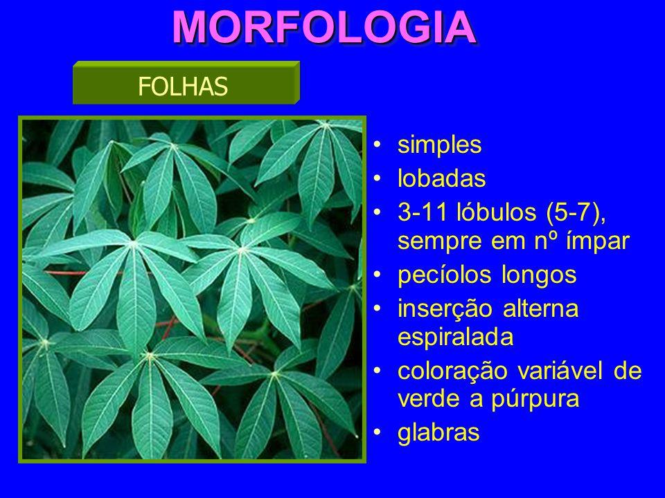 MORFOLOGIAMORFOLOGIA simples lobadas 3-11 lóbulos (5-7), sempre em nº ímpar pecíolos longos inserção alterna espiralada coloração variável de verde a