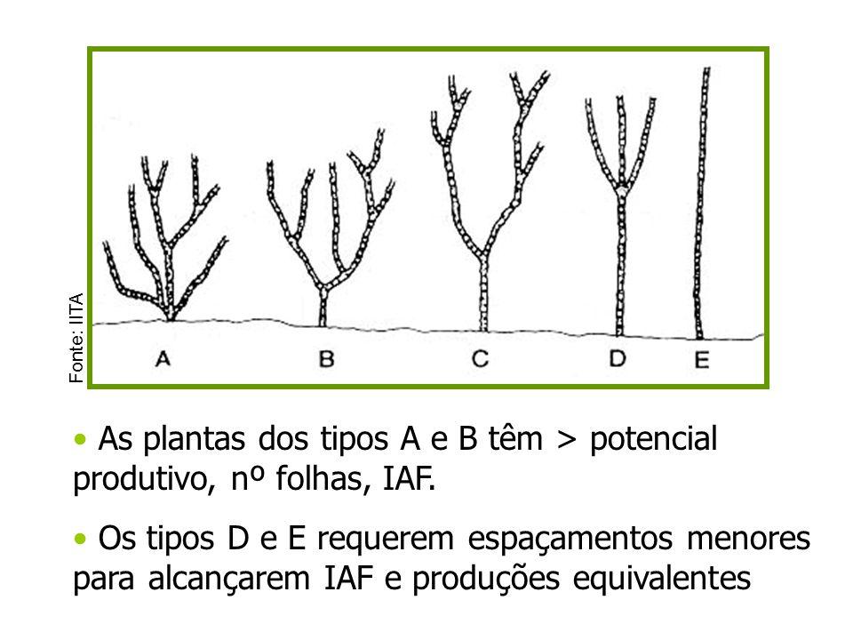 As plantas dos tipos A e B têm > potencial produtivo, nº folhas, IAF. Os tipos D e E requerem espaçamentos menores para alcançarem IAF e produções equ