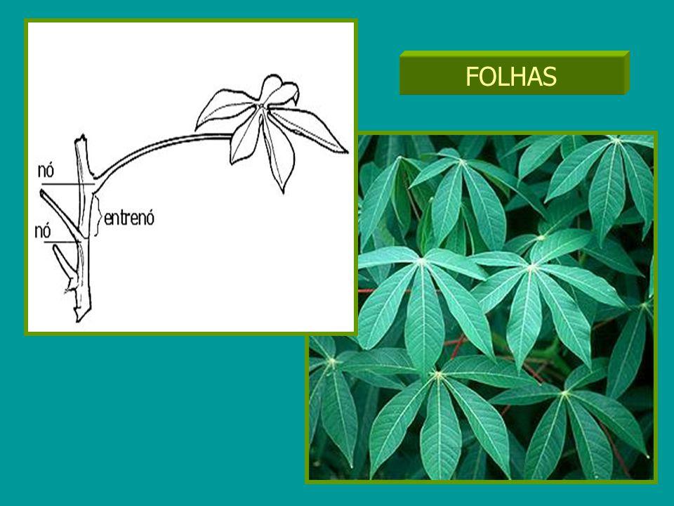 Inserção das folhas FOLHAS
