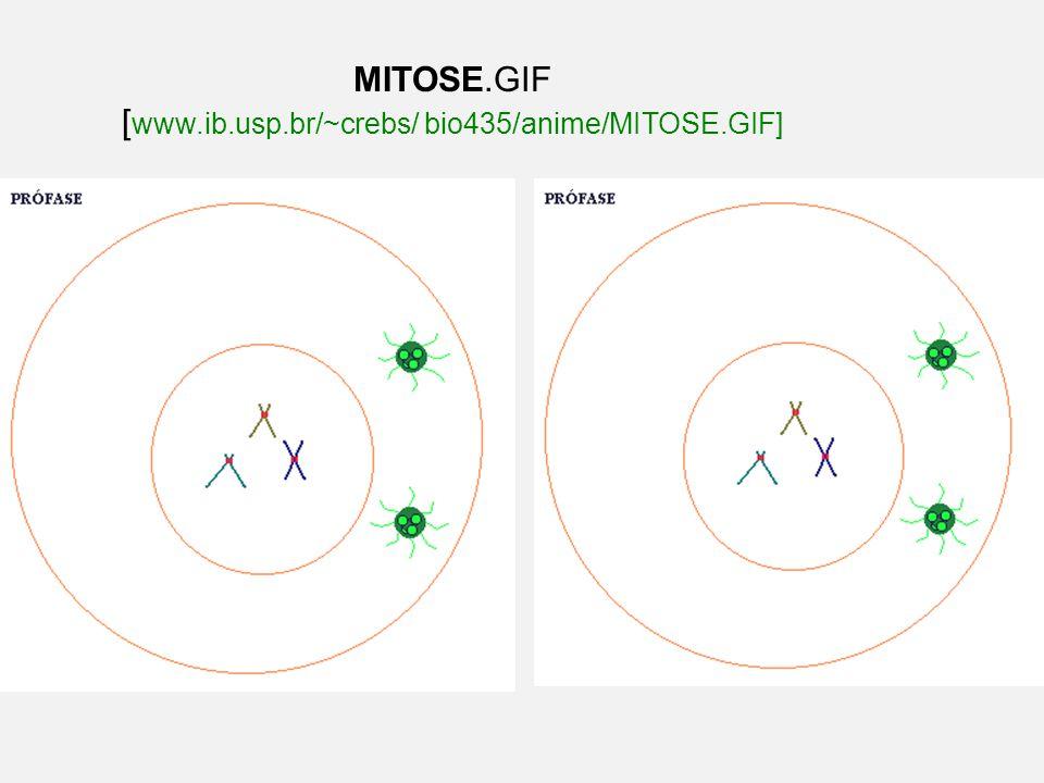 MITOSE.GIF [ www.ib.usp.br/~crebs/ bio435/anime/MITOSE.GIF]