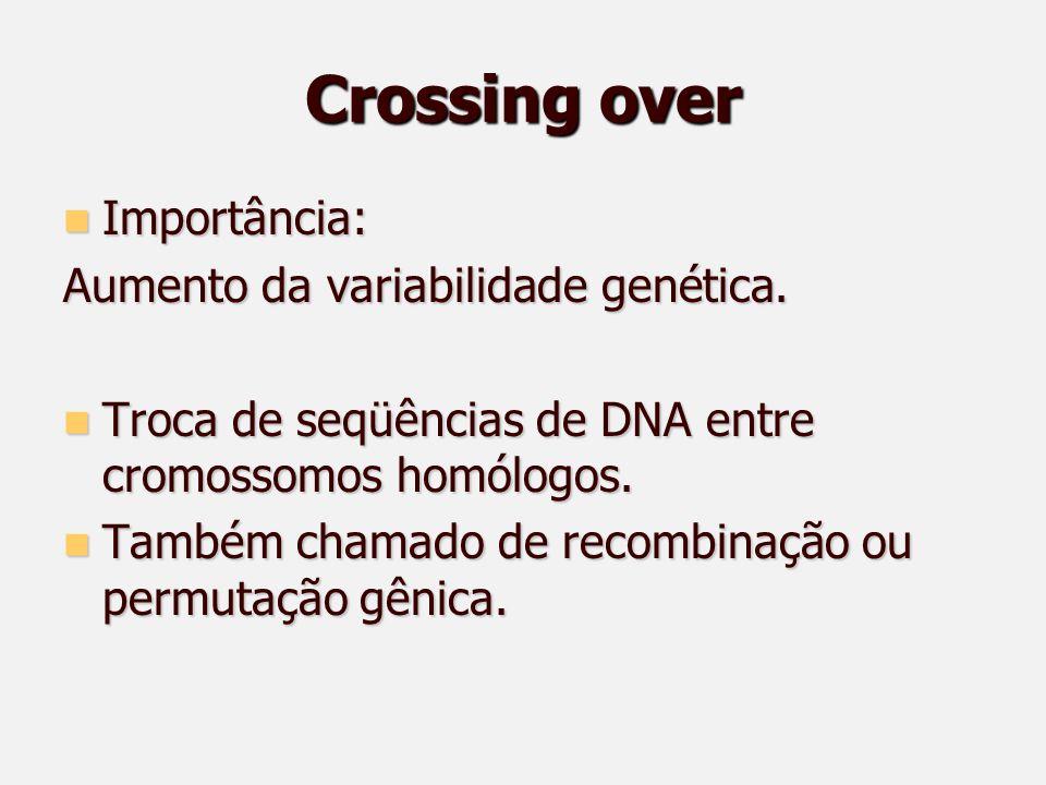 Crossing over Importância: Importância: Aumento da variabilidade genética.