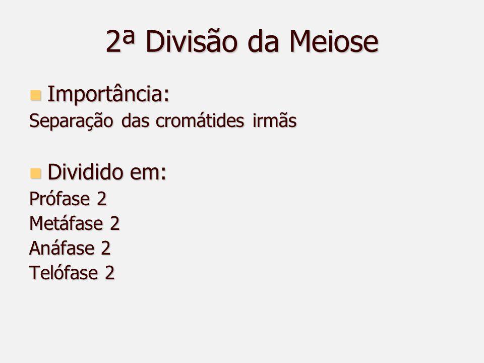 2ª Divisão da Meiose Importância: Importância: Separação das cromátides irmãs Dividido em: Dividido em: Prófase 2 Metáfase 2 Anáfase 2 Telófase 2