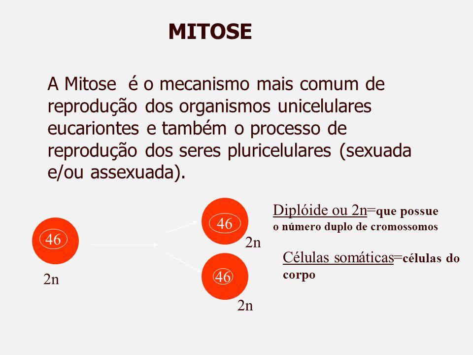 MITOSE 46 2n Diplóide ou 2n= que possue o número duplo de cromossomos Células somáticas= células do corpo A Mitose é o mecanismo mais comum de reprodução dos organismos unicelulares eucariontes e também o processo de reprodução dos seres pluricelulares (sexuada e/ou assexuada).