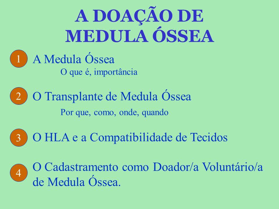 A DOAÇÃO DE MEDULA ÓSSEA A Medula Óssea O que é, importância O Transplante de Medula Óssea Por que, como, onde, quando O HLA e a Compatibilidade de Te