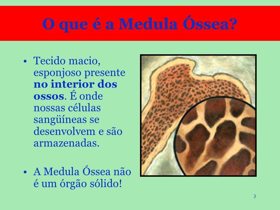 3 O que é a Medula Óssea? Tecido macio, esponjoso presente no interior dos ossos. É onde nossas células sangüíneas se desenvolvem e são armazenadas. A