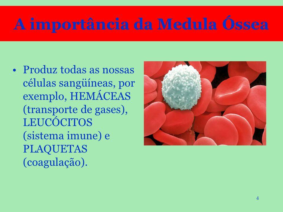 4 Produz todas as nossas células sangüíneas, por exemplo, HEMÁCEAS (transporte de gases), LEUCÓCITOS (sistema imune) e PLAQUETAS (coagulação). A impor
