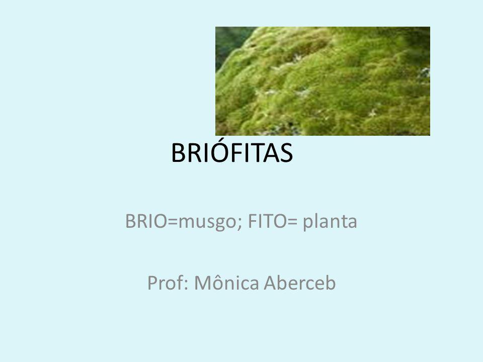 BRIÓFITAS BRIO=musgo; FITO= planta Prof: Mônica Aberceb