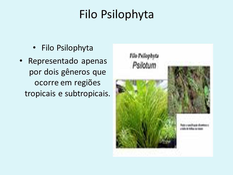 Filo Psilophyta Representado apenas por dois gêneros que ocorre em regiões tropicais e subtropicais.