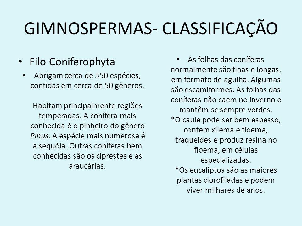 GIMNOSPERMAS- CLASSIFICAÇÃO Filo Coniferophyta Abrigam cerca de 550 espécies, contidas em cerca de 50 gêneros. Habitam principalmente regiões temperad