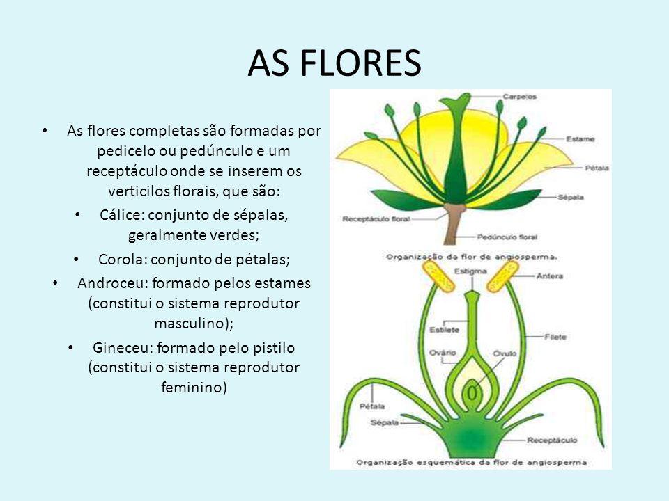 AS FLORES As flores completas são formadas por pedicelo ou pedúnculo e um receptáculo onde se inserem os verticilos florais, que são: Cálice: conjunto