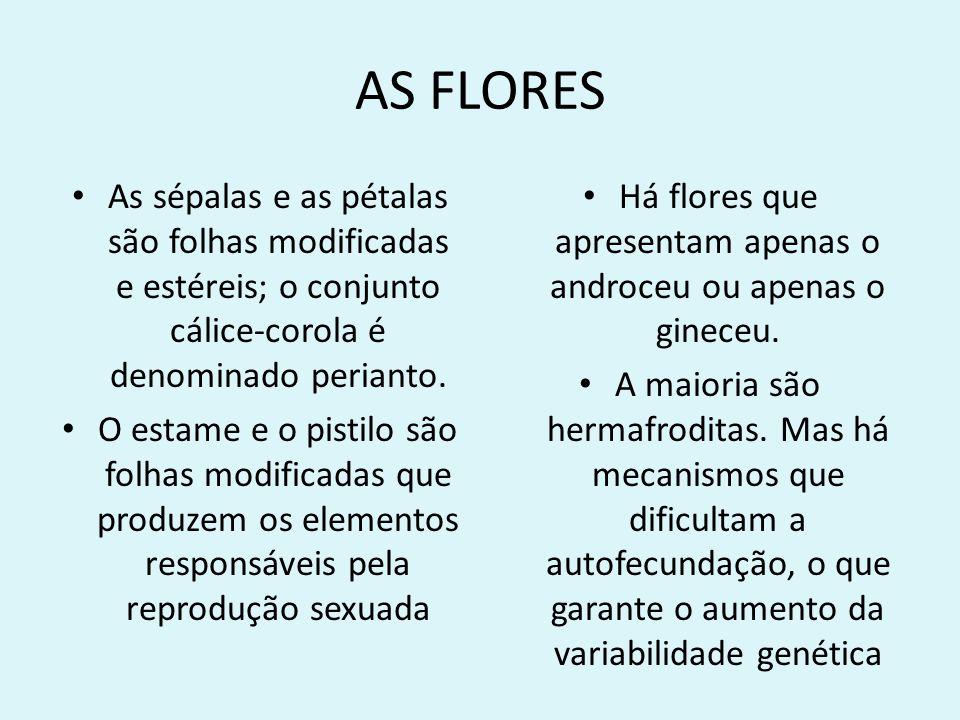AS FLORES As sépalas e as pétalas são folhas modificadas e estéreis; o conjunto cálice-corola é denominado perianto. O estame e o pistilo são folhas m