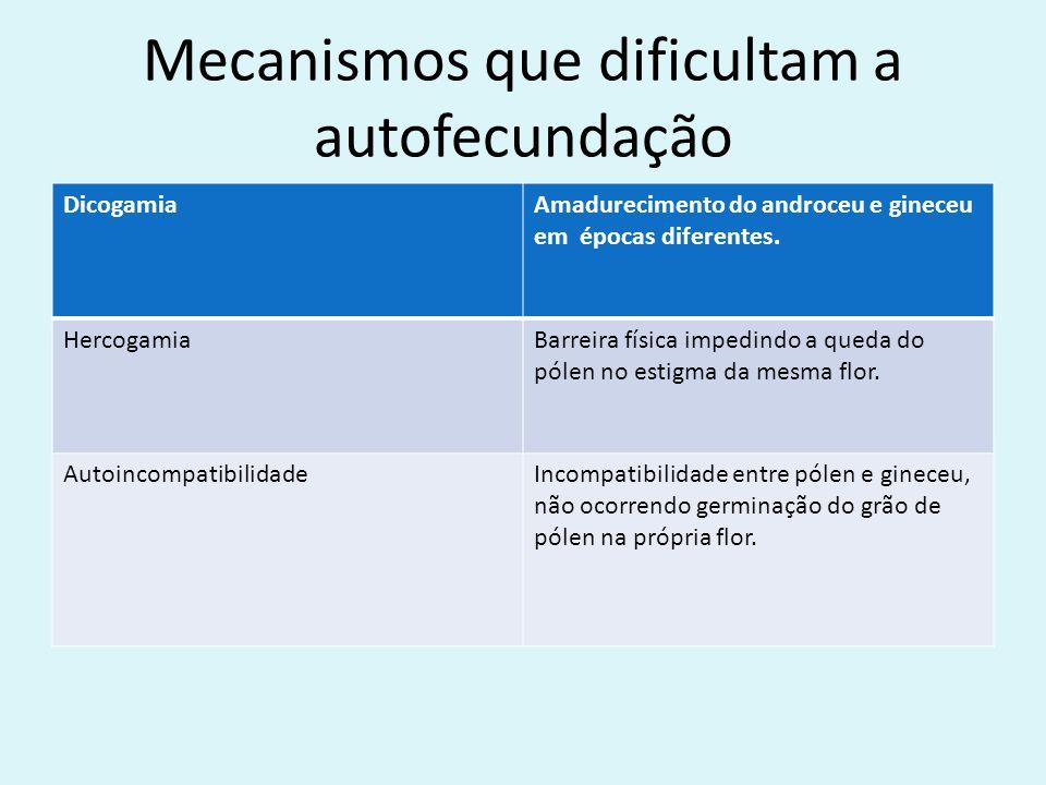 Mecanismos que dificultam a autofecundação DicogamiaAmadurecimento do androceu e gineceu em épocas diferentes. HercogamiaBarreira física impedindo a q