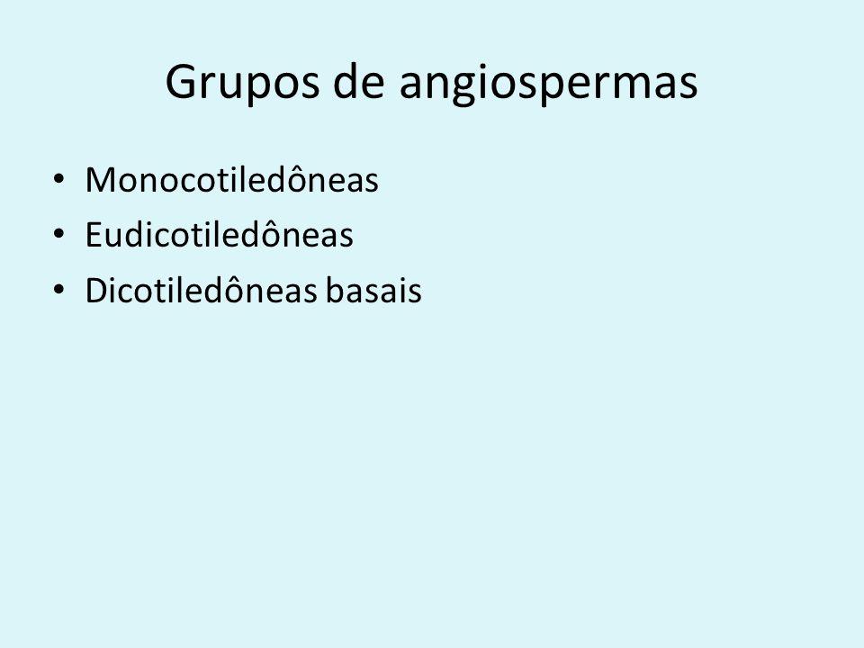 Grupos de angiospermas Monocotiledôneas Eudicotiledôneas Dicotiledôneas basais