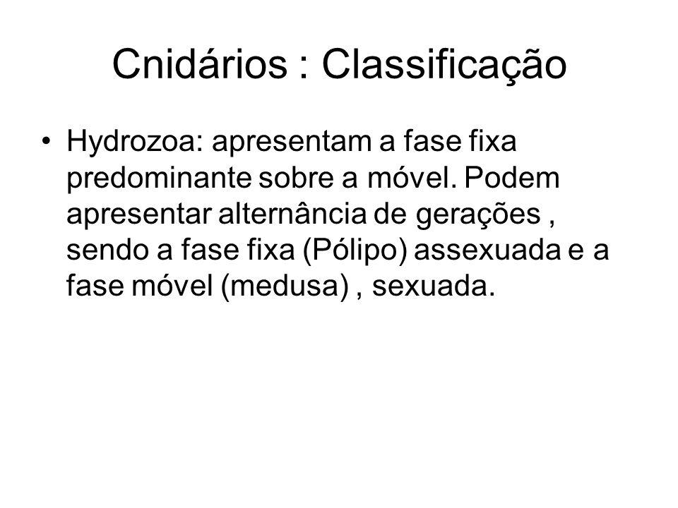 Cnidários : Classificação Hydrozoa: apresentam a fase fixa predominante sobre a móvel.
