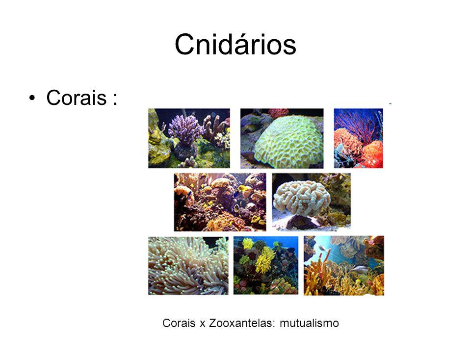 Cnidários Corais : Corais x Zooxantelas: mutualismo