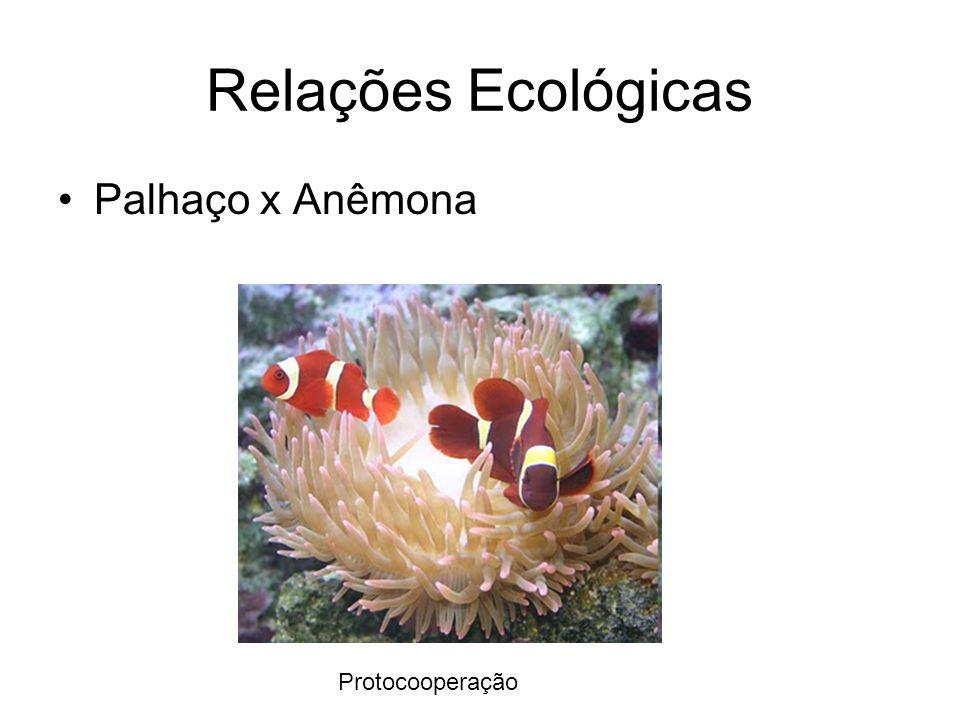 Relações Ecológicas Palhaço x Anêmona Protocooperação