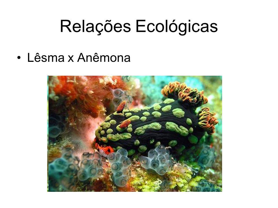 Relações Ecológicas Lêsma x Anêmona