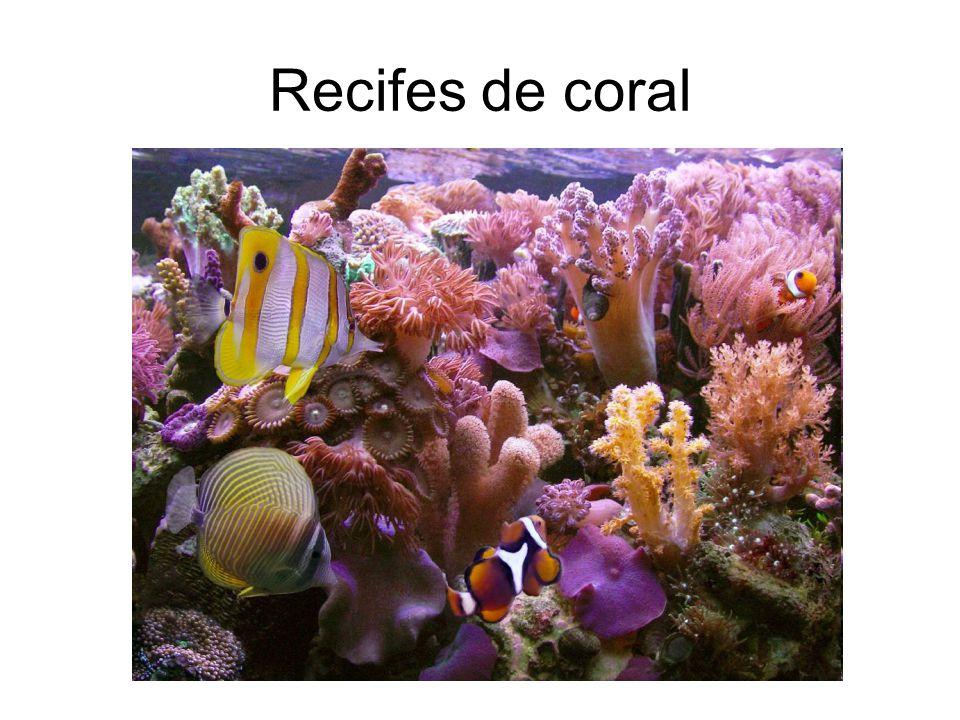 Recifes de coral