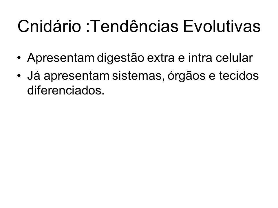 Cnidário :Tendências Evolutivas Apresentam digestão extra e intra celular Já apresentam sistemas, órgãos e tecidos diferenciados.