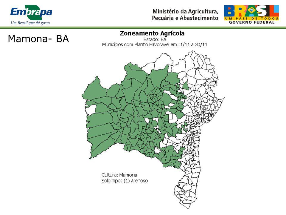 Mamona- BA