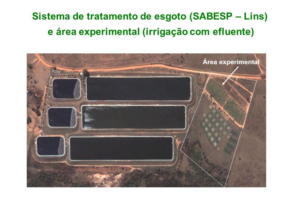 Sistema de tratamento de esgoto (SABESP – Lins) e área experimental (irrigação com efluente) Área experimental