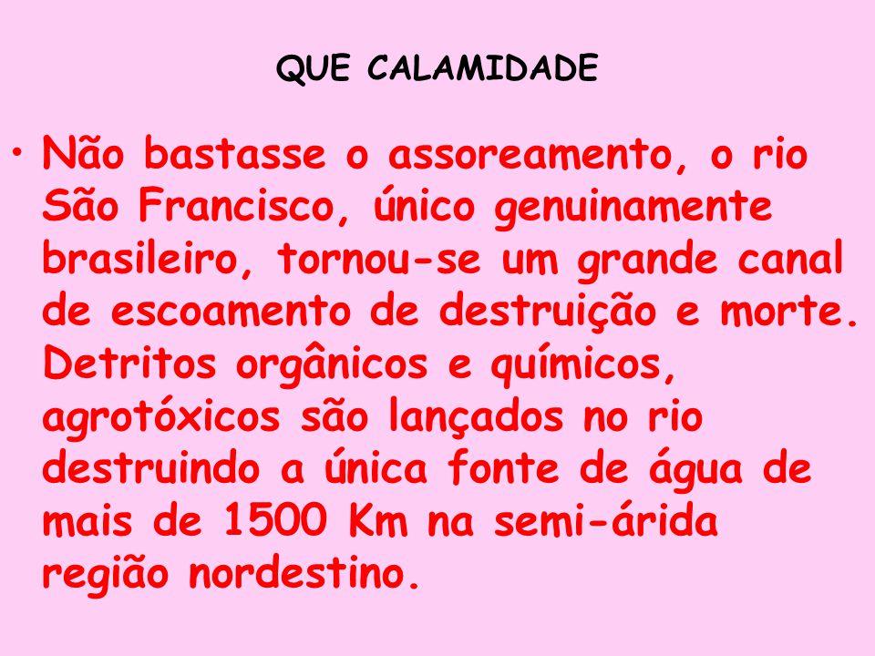 QUE CALAMIDADE Não bastasse o assoreamento, o rio São Francisco, único genuinamente brasileiro, tornou-se um grande canal de escoamento de destruição