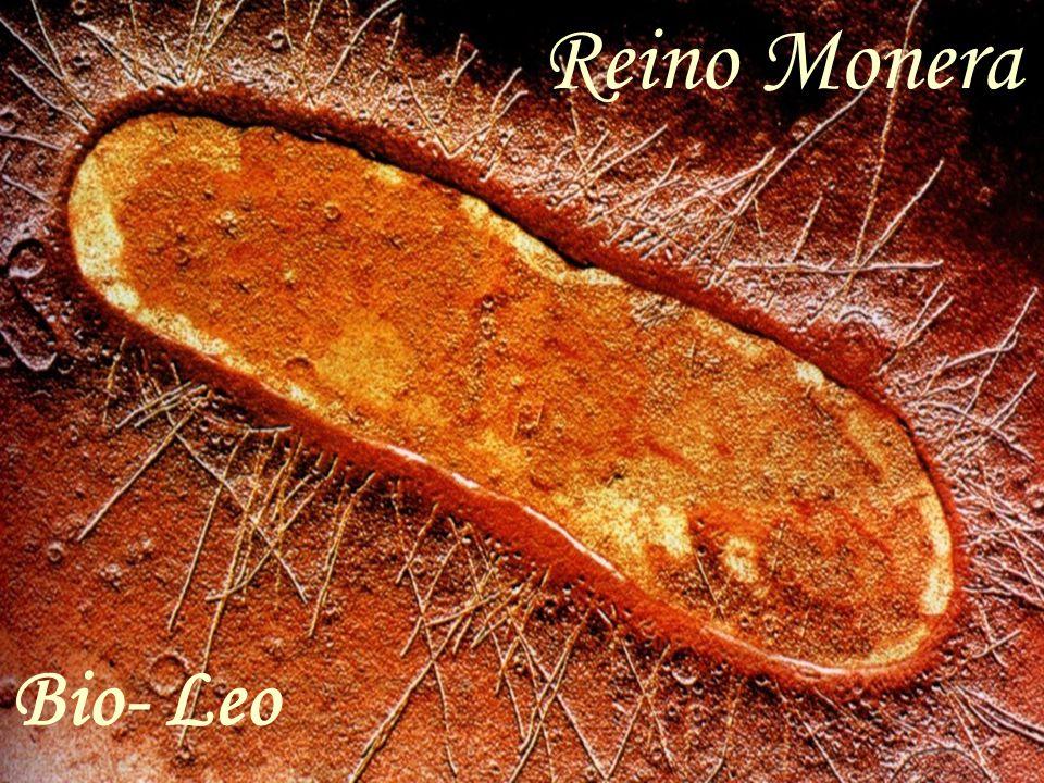 Reino Monera Bio- Leo