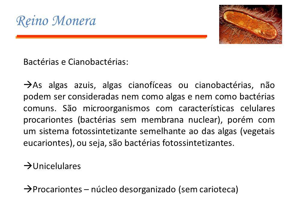 Reino Monera Bactérias e Cianobactérias:  As algas azuis, algas cianofíceas ou cianobactérias, não podem ser consideradas nem como algas e nem como b