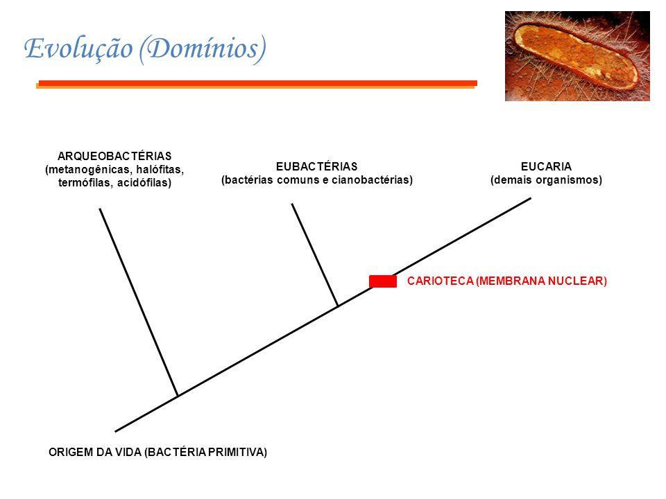 Evolução (Domínios) ORIGEM DA VIDA (BACTÉRIA PRIMITIVA) EUBACTÉRIAS (bactérias comuns e cianobactérias) ARQUEOBACTÉRIAS (metanogênicas, halófitas, ter