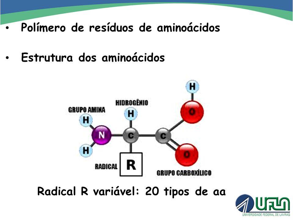 Polímero de resíduos de aminoácidos Radical R variável: 20 tipos de aa Estrutura dos aminoácidos